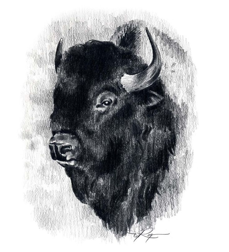 15 best images about Buffalo Tattoo on Pinterest