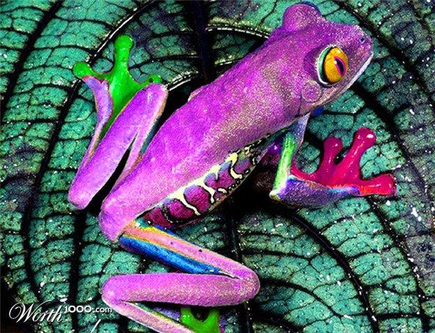 Belle grenouille                                                                                                                                                                                 Plus