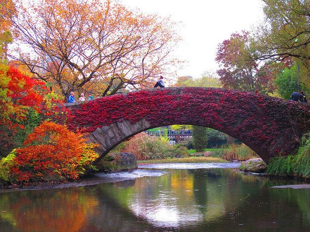 Central Park dresses itself in red and gold, just for you. | 21 Reasons There's No Place Like New York In Autumn