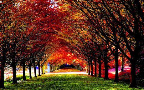 Colorful Autumn Trees Park photos