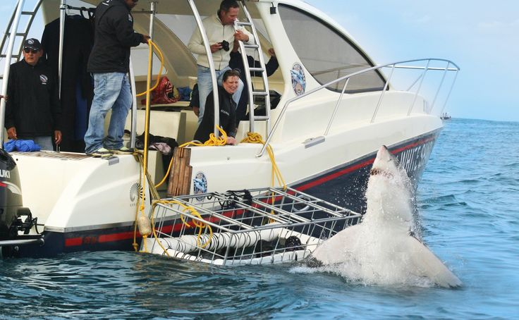 Wild! Shark Cage Diving with @whitesharkco. Exclusive & Private Tours http://www.sharkcagedive.com/