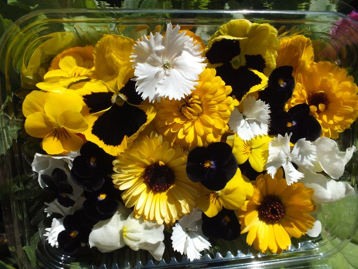 Edible flowers. Black and yellow.