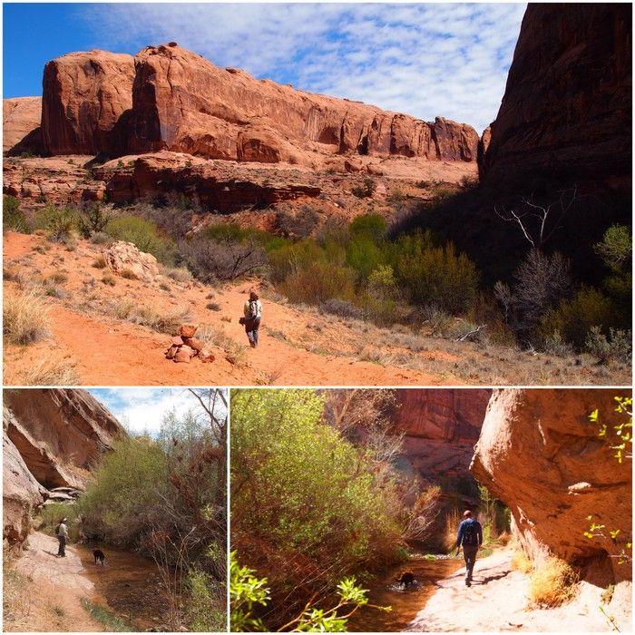 dog friendly hiking in moab, utah