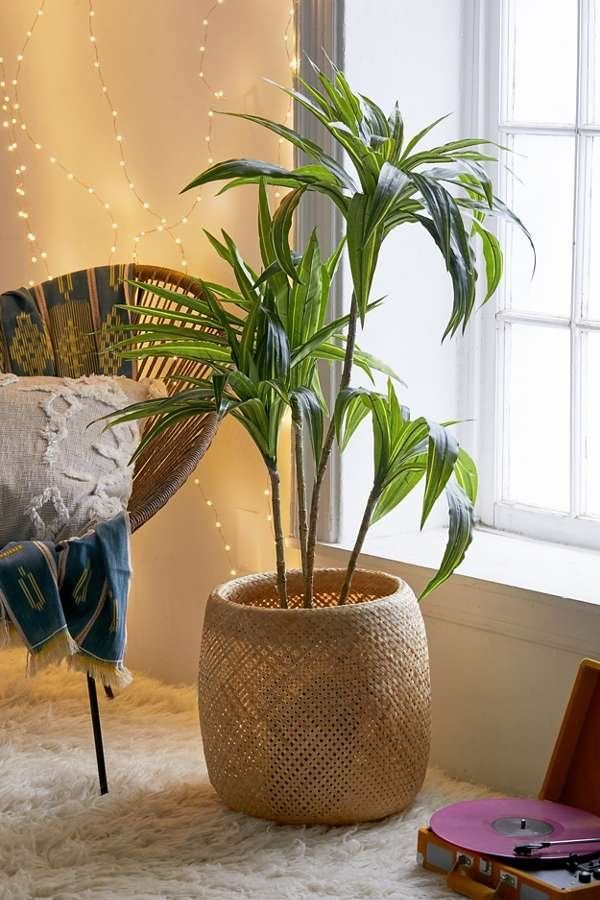 home decor ideas use tropical leaves.htm dracena 4 ft potted faux tree  with images  faux tree  dracena  dracena 4 ft potted faux tree  with