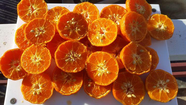 Home grown mandarins