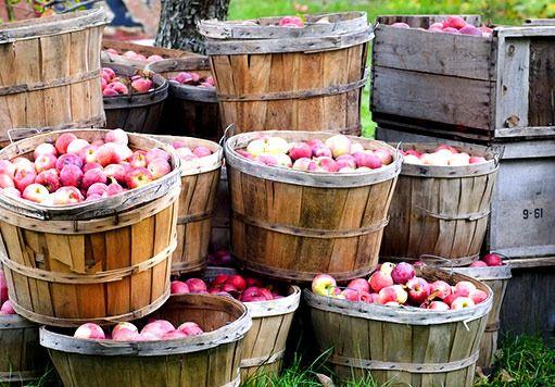 Vše o jablku: pěstování, sklizeň, uskladnění, moštování, sušení... - Užitková zahrada