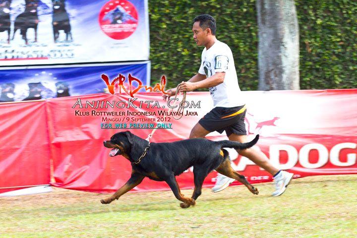 Galeri Foto - Pameran Anjing Rottweiler KRI Jaya - - AnjingKita.Com