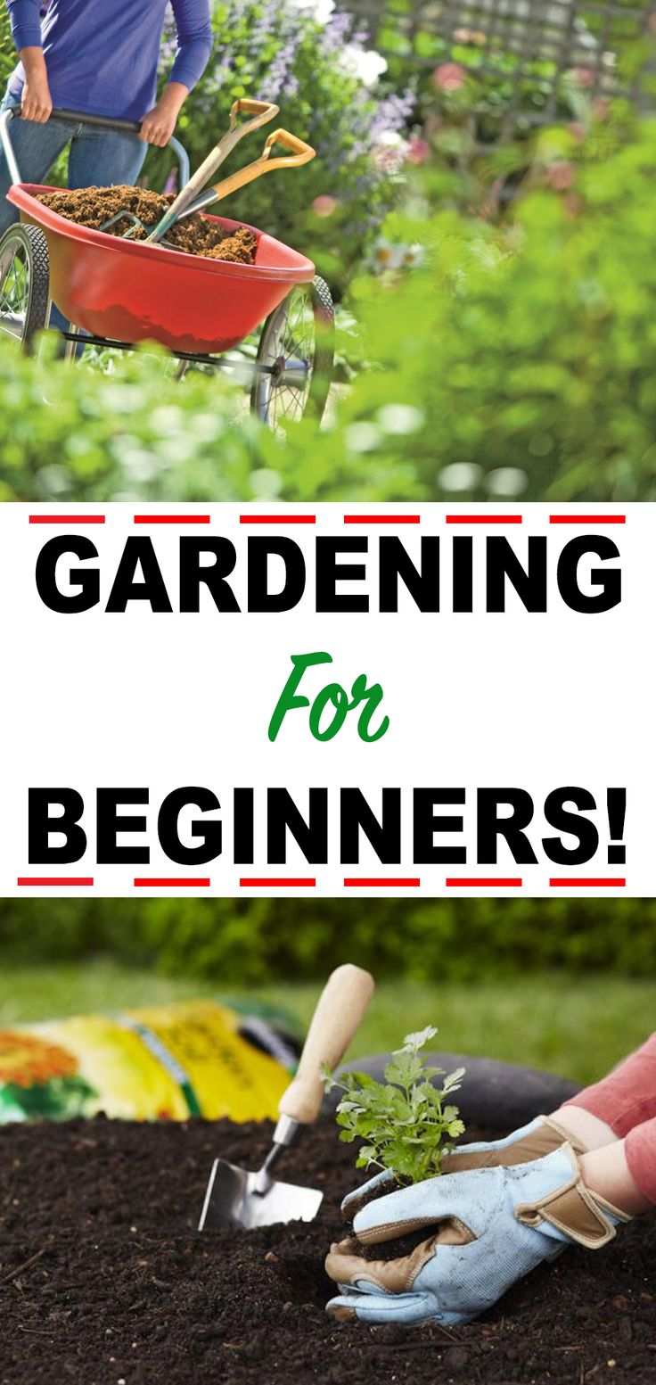 11 Tips for Beginning Gardeners!  – Home and Garden