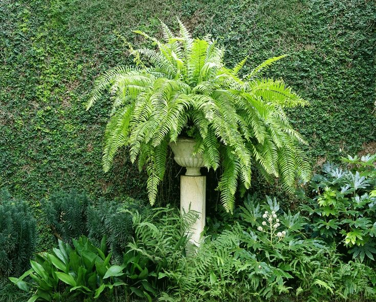 Incorporating Ferns — Selecting the perfect on for your garden.