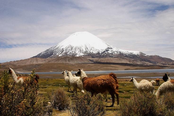 *** PARQUE NACIONAL LAUCA <<< Excelente !! | CHILE | reportajes | Parque Nacional Lauca