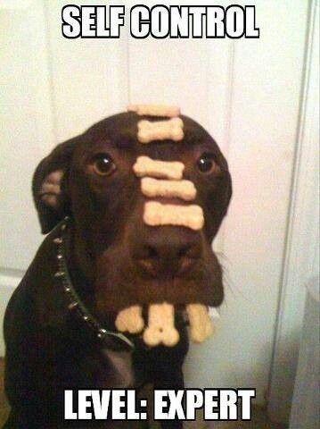 54 Best Images About Dog Funnies On Pinterest Pets Mans