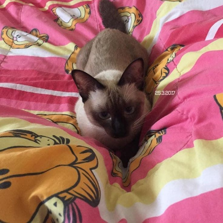 Cat แม พลอย แมวน าร ก แมว