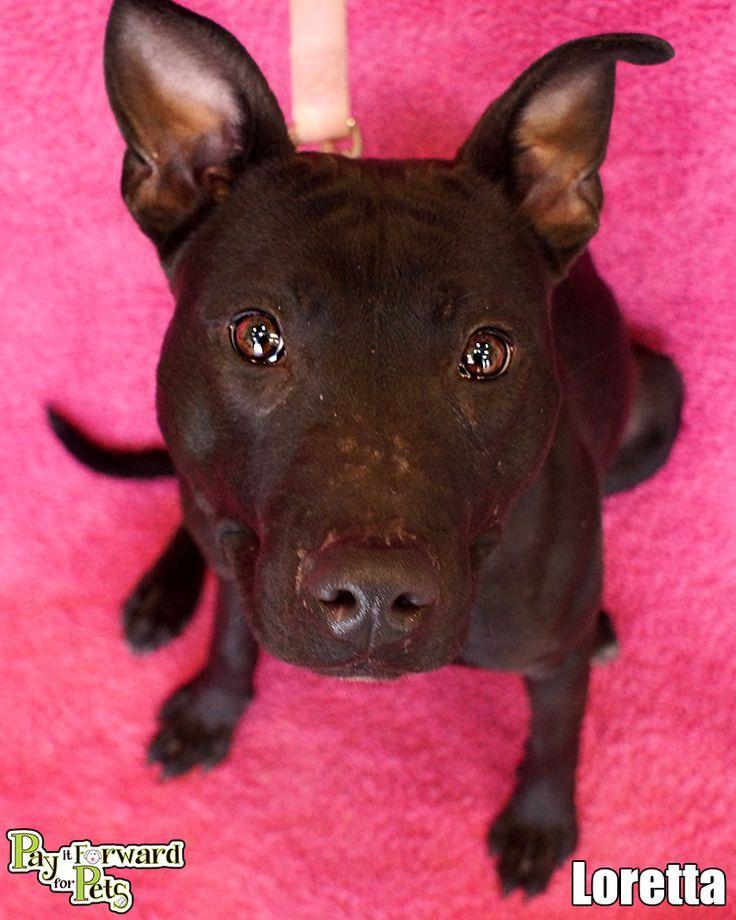 Adopt Loretta On Fur Babies Pet Adoption No Kill Animal Shelter