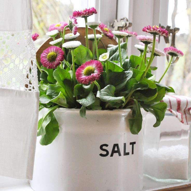 Allerede torsdag og snart helg💕 Ha en fine dag! 🍃🌸🍃 #daisies #tusenfryd#emalje#vår