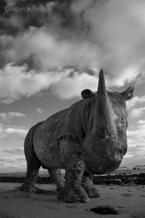 You're a man?  Really?  What have you done to bring attention to the killing of this animal?  FUCK YOU.  Rhino by Davis Murphy