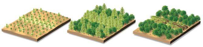 Danske Skove kan fordoble produktionen af træ til energi - Dansk Skovforening