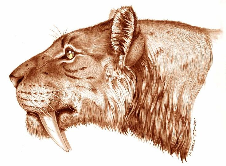 Smilodon Face By Pyroraptor42 On Deviantart: Smilodon By ~Gonzalezaurus