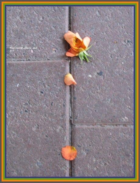 The rose... by Heli Aarniranta on ARTwanted