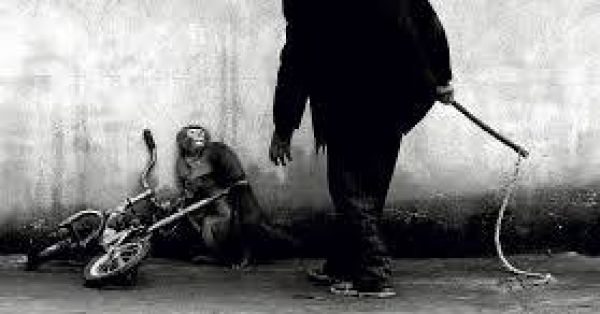 Stop the  torture of wild animals in Suzhou/China  https://secure.avaaz.org/de/petition/Botschaft_der_VR_China_Berlin_Stoppt_die_Tierfolterei_von_Wildtieren_in_SuzhouChina/?wxEkqjb(English version below)