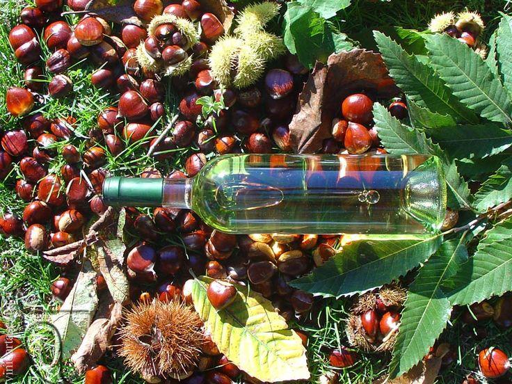 #Gavi in #autunno (#vino #castagne #bottiglia) - #autumn in Gavi (#wine #chestnuts #bottle) www.vinicartasegna.it