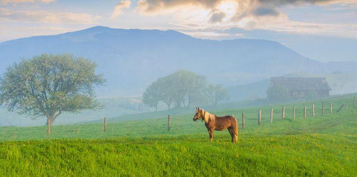 Entgiftung beim Pferd