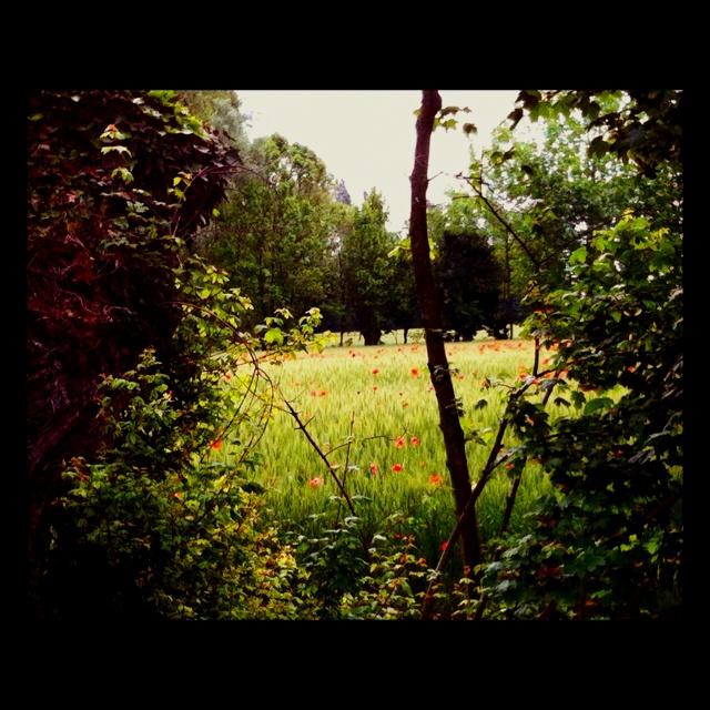 Scorcio di campagna trevigiana in primavera...
