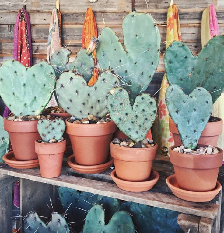 lovefashionation : HEART CACTUS