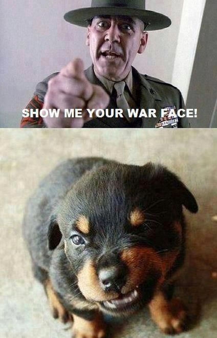 Show me your war face: Animals, Dogs, Faces, Puppy, Funny Animal, War Face