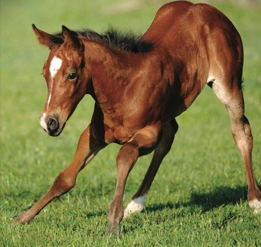 rein-it-in:  one-stirrup-in-the-dirt:  here's a cutting horse in the making! look at that rump <3  I just love this post <3 I'll bet t...
