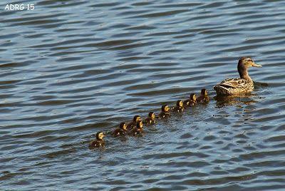UN AMBIENTALISTA: Siguiendo a mamá : )