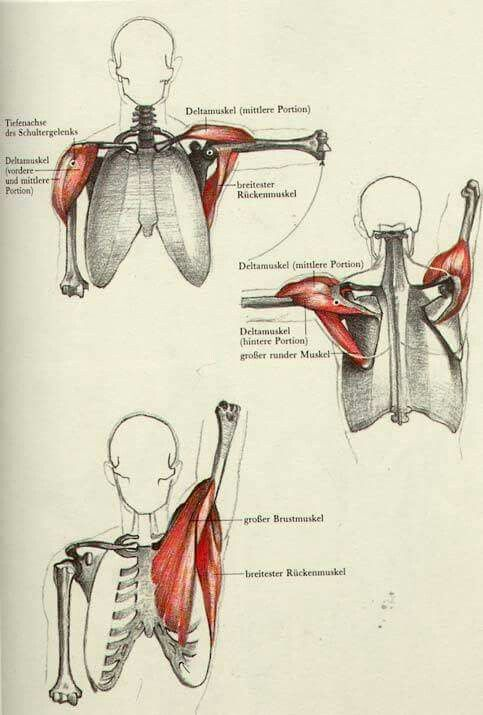 The Complete Guide to Anatomy for Artists & Illustrators ...