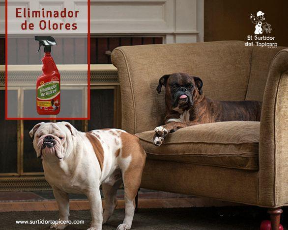 Si a tu mascota le encanta subirse a los sillones, tenemos el mejor eliminador de olores para que tu sala siempre huela como nueva.