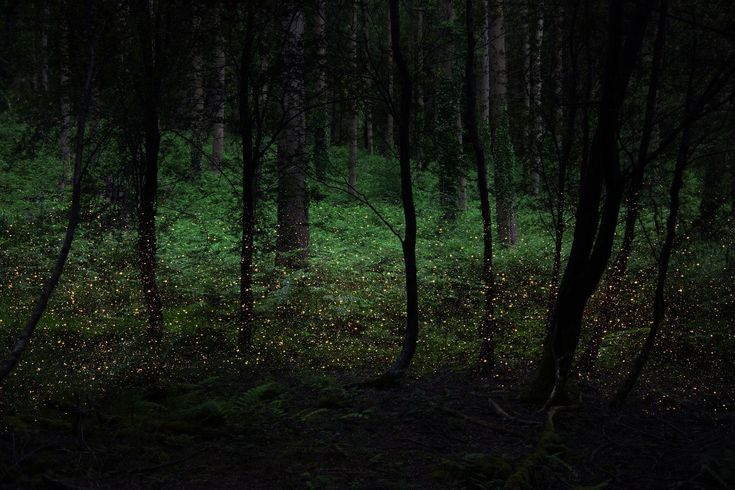 Into the Woods - Photography by Elle Davies