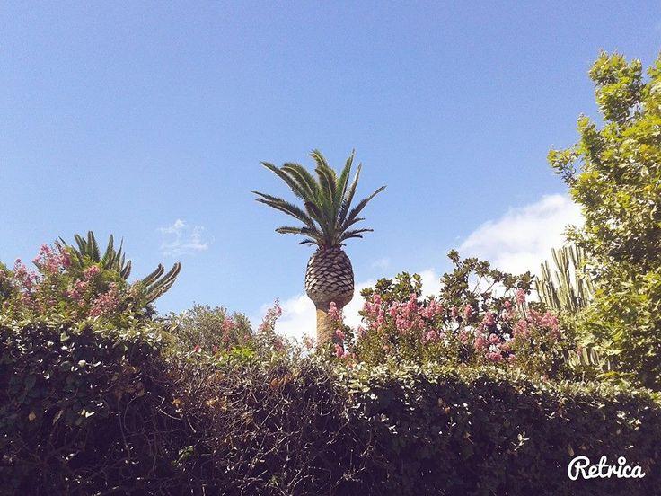 gli ananas sanno volare