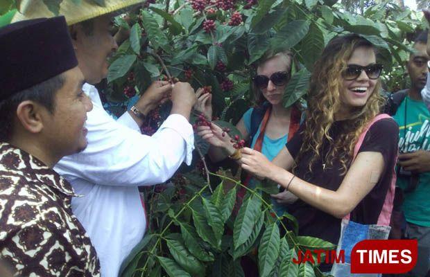 Wisatawan asing turut hadir dalam Festival Petik Kopi (Foto:Widie Nurmahmudy/ BanyuwangiTIMES)