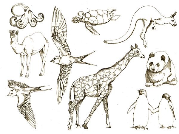 Line Art Drawings Of Animals : Best how to draw animals images on pinterest