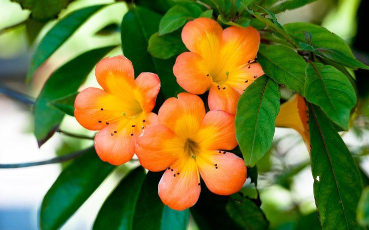 Оранжевые цветки (m-flw-019) - Цветы - Модульные картины