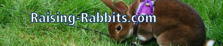 Meat Rabbits: Raise these breeds for Home and Backyard Meat Production