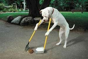 i wishDogs Training, Cleaning, Funny Dogs, Funnyanimal, Pets, Funny Stuff, Humor, Things, Funny Animal