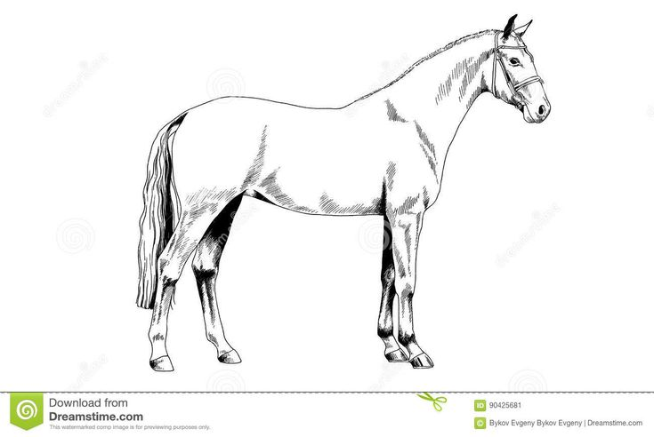 https://www.dreamstime.com/stock-illustration-race-horse