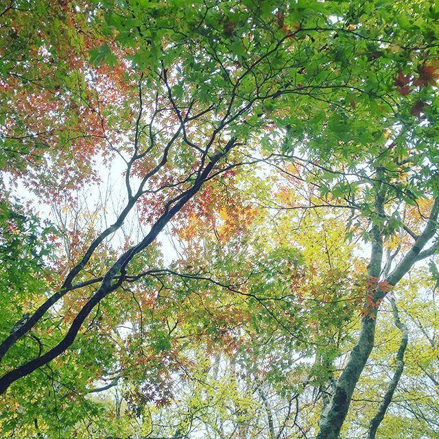 【clef_boite】さんのInstagramの写真をピンしています。《見上げると赤・・橙・・黄色・・黄緑に緑と色とりどり🍁🎨 #ドライブ#日帰り#旅行#紅葉#紅葉狩り#霧雨#林#沢#せせらぎ街道#西ウレ峠#岐阜#高山#飛騨高山#飛騨#drive#trip#drizzle#autumnleaves#maple#mountainpass#forest#swamp#Japan#gifu#takayama#hida#hidatakayama》