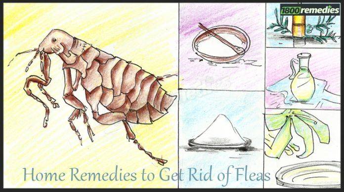 2681d595c0d5f8043eb885f324564bd2 - How To Get Rid Of Fleas Without Spending Money