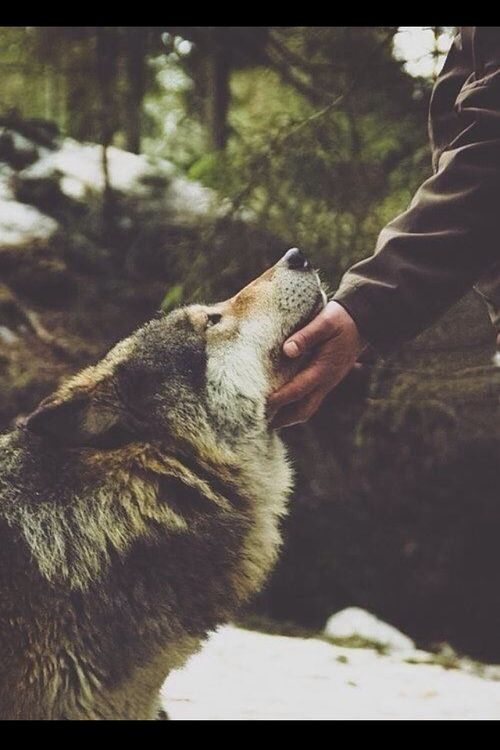 wolf <3