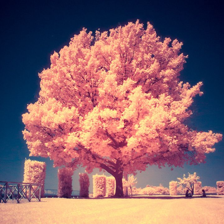 22 creative and mysterious examples of infrared photography via http://ow.ly/b4d5A #inspiration
