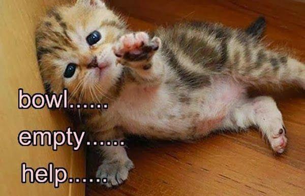 Slapcaption.com - Caption Funny Photos and Meme Gallery