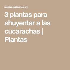 3 plantas para ahuyentar a las cucarachas   Plantas