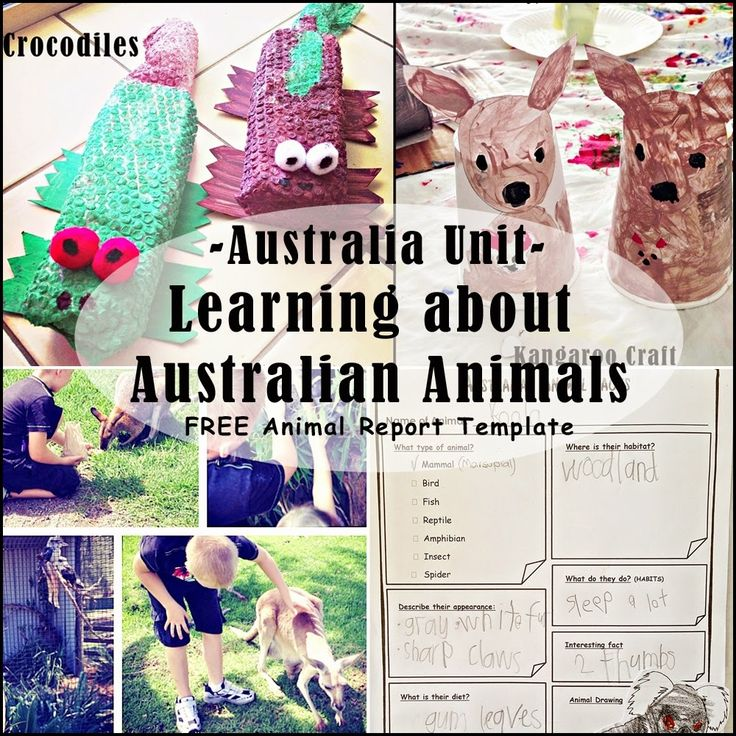 Australia Unit - 5 Activities for Learning about Australian Animals with a FREE printable Animal Report Template