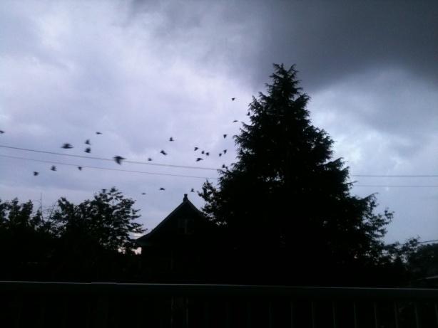 Crow Corridor