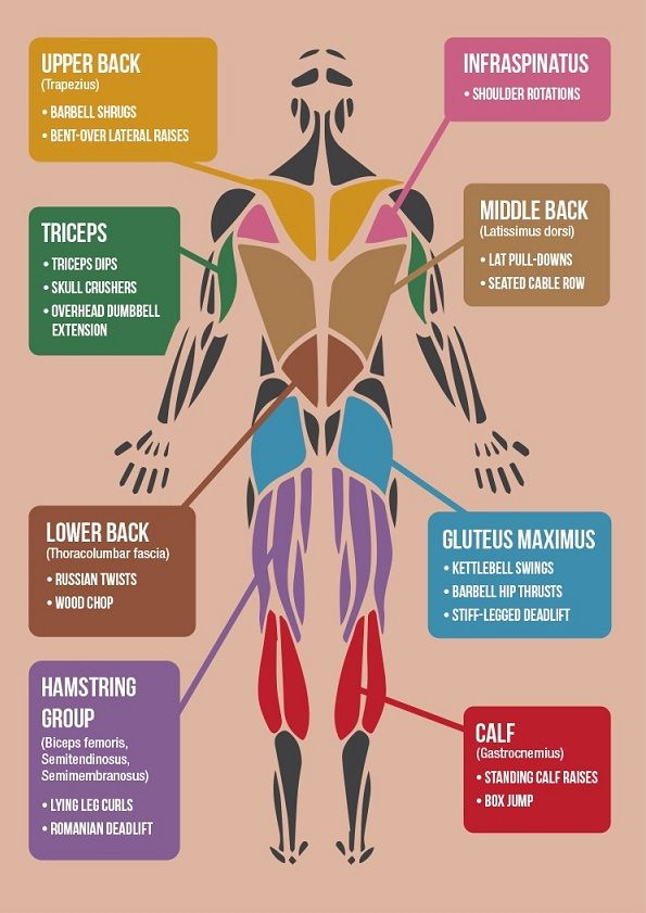 Infographic: The 'Best' Exercises For Each Muscle Group In The Body - Posterior Chain