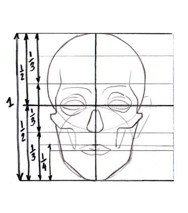 Proportions of the face.